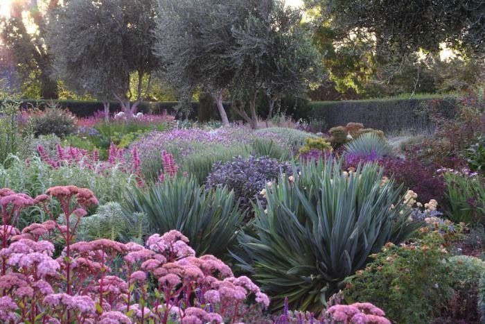 Drought resistant plants Garden Pinterest