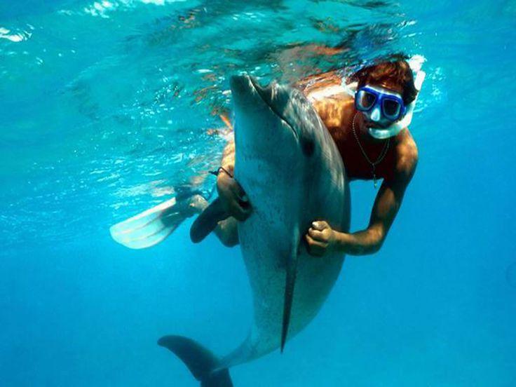 Nager avec les dauphins wishlist pinterest for Nager avec les dauphins nice