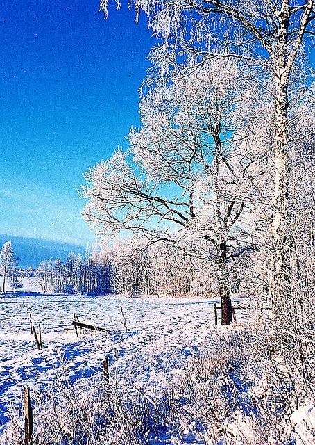 Winter Landscape Sweden I Wanna Go Pinterest