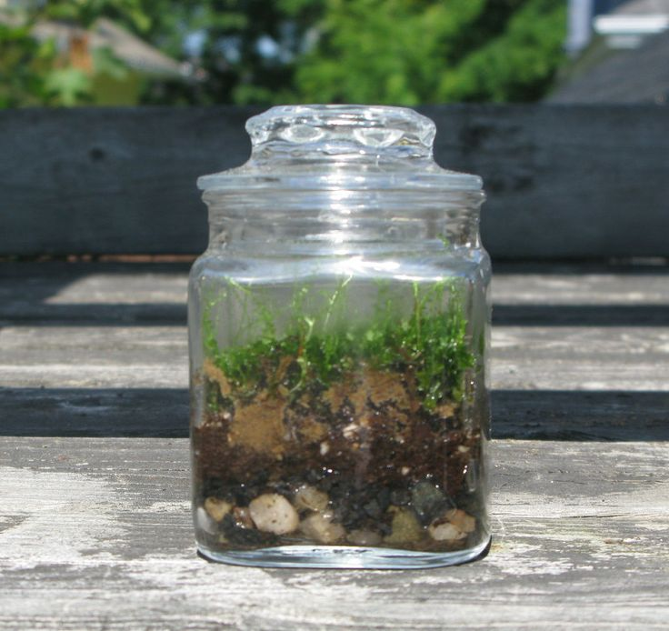 Gardening In Bottle : Make your own moss in a bottle.
