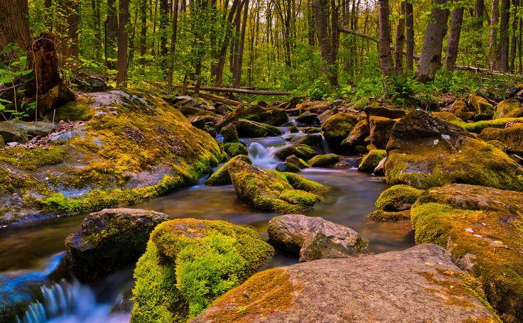 More like this: shenandoah national parks , virginia and national ...