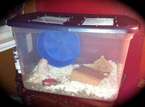 hamster bin cage tutorial hamster pinterest
