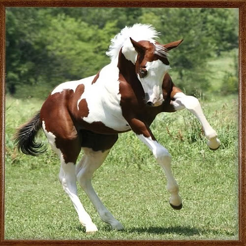 Beautiful Paint Horse   animals   Pinterest