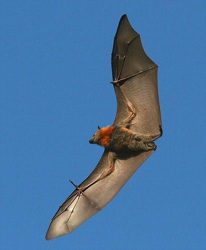 Aerial animals list