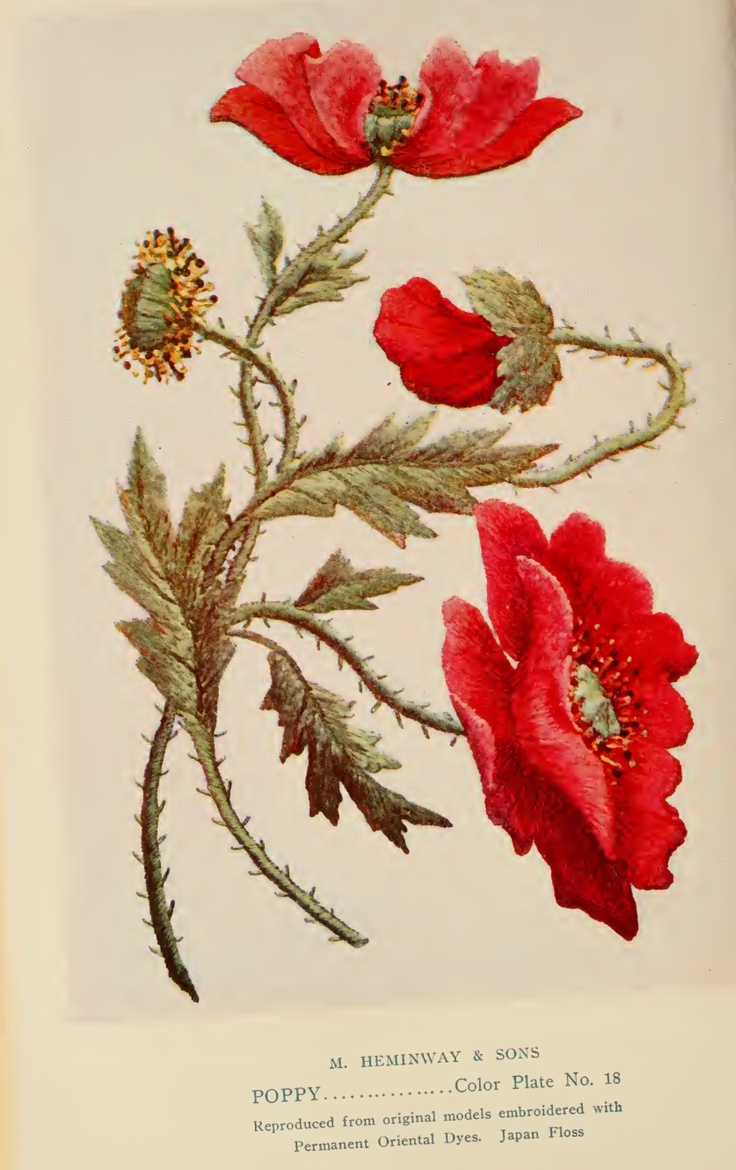 "Poppy Embroidery from ""A Treatise on Embroidery"" published in 1907."