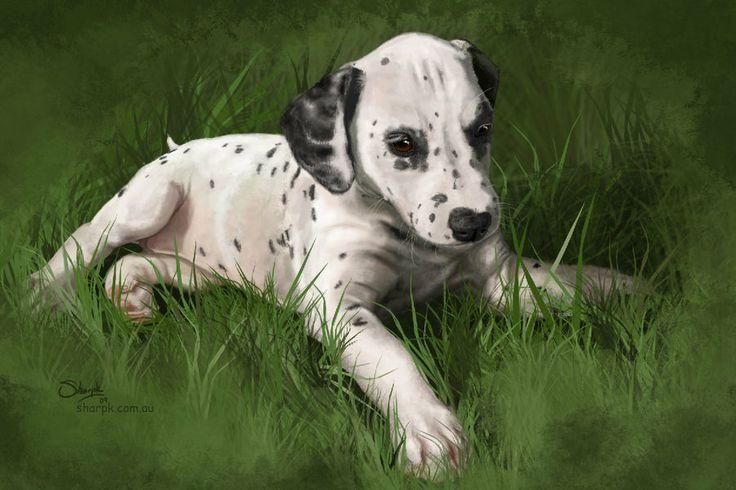 Dalmatian puppy | I love dalmatian