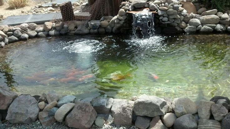 Concrete pond customer 39 s ponds pinterest for Diy concrete pond