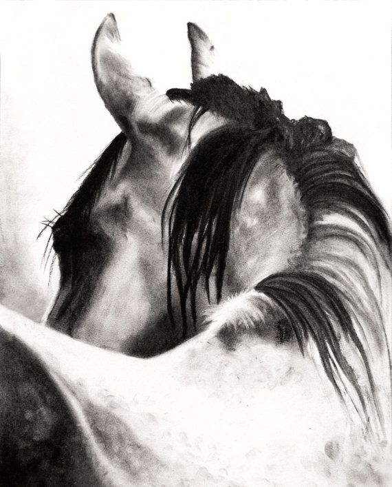 THE LOOK, Charcoal, Drawing, Art Print, Horse, Animal ...