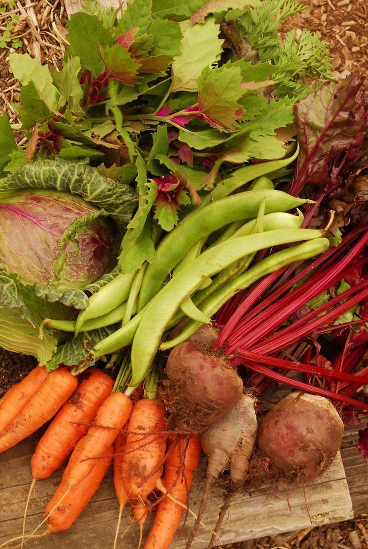 Top growing food brands