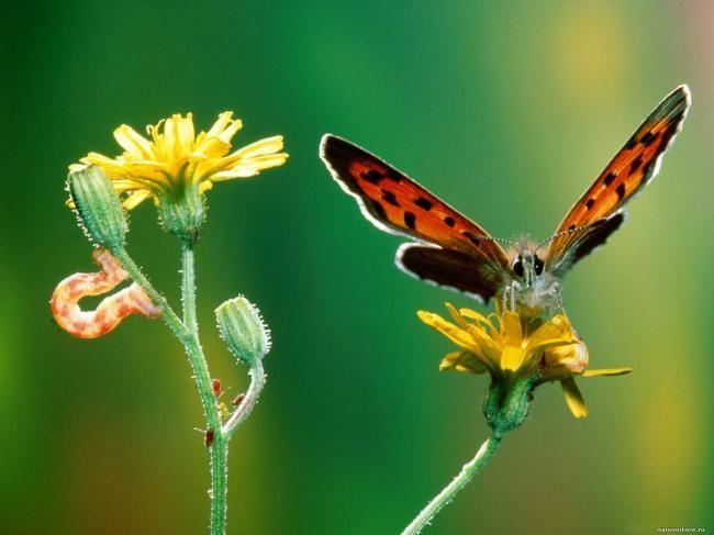 Картинки бабочек красивых цветных - aa