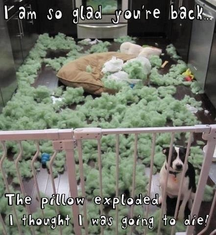 Dog Meme it Just Exploded Dog Meme it Just Exploded it