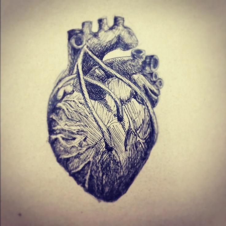 Human Heart Anatomy Art - intellego