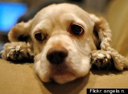 Dogs Empathy Study