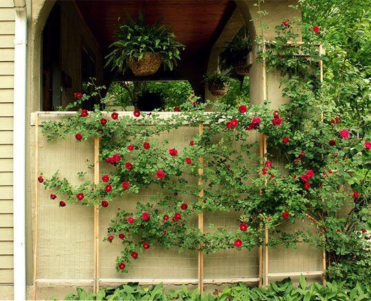 Create your own custom trellis for climbing plants annalea hart - Climbing rose trellis ...