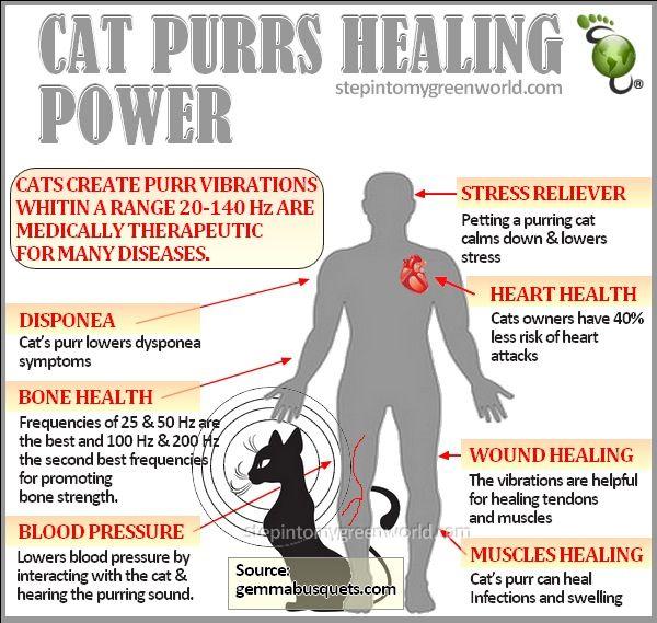 cat uti symptoms female