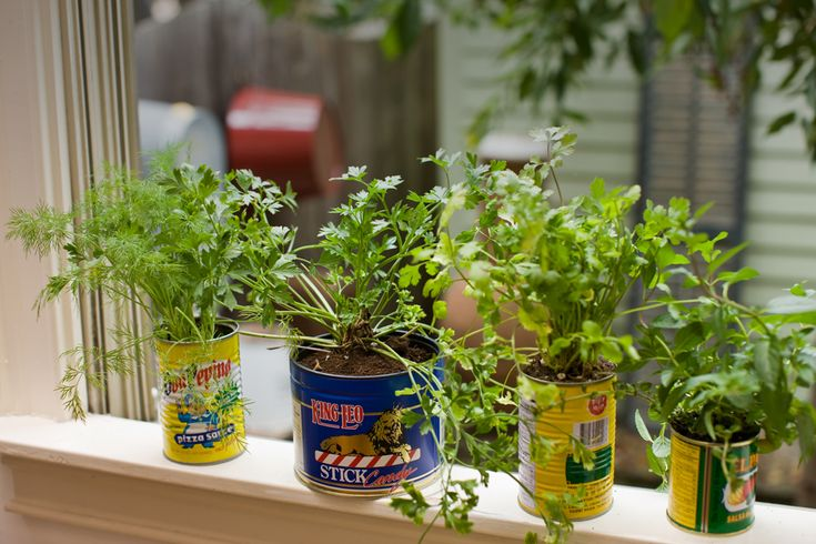Pot herbs in recycled cans for a colourful centrepiece Kitchen windowsill herb pots