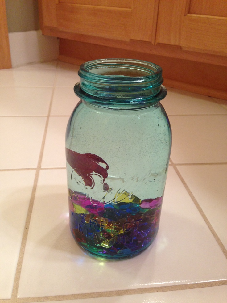 DIY fish tank Fish tank Pinterest