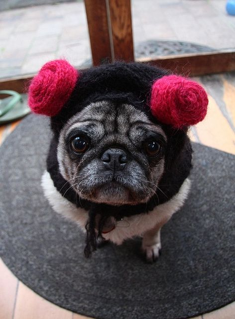 Knitting Pattern For Pug Hat : knit hat pug pug crazy and loving it Pinterest