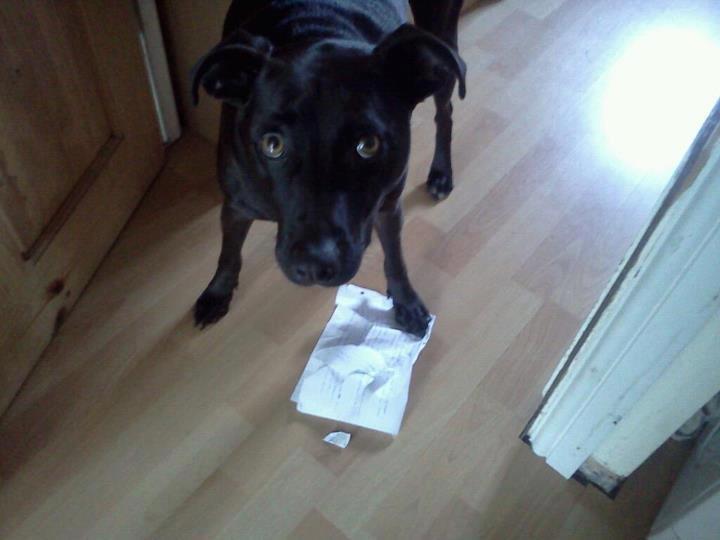 homework um my homework ate my dog hey tim its actually your dog ate ...