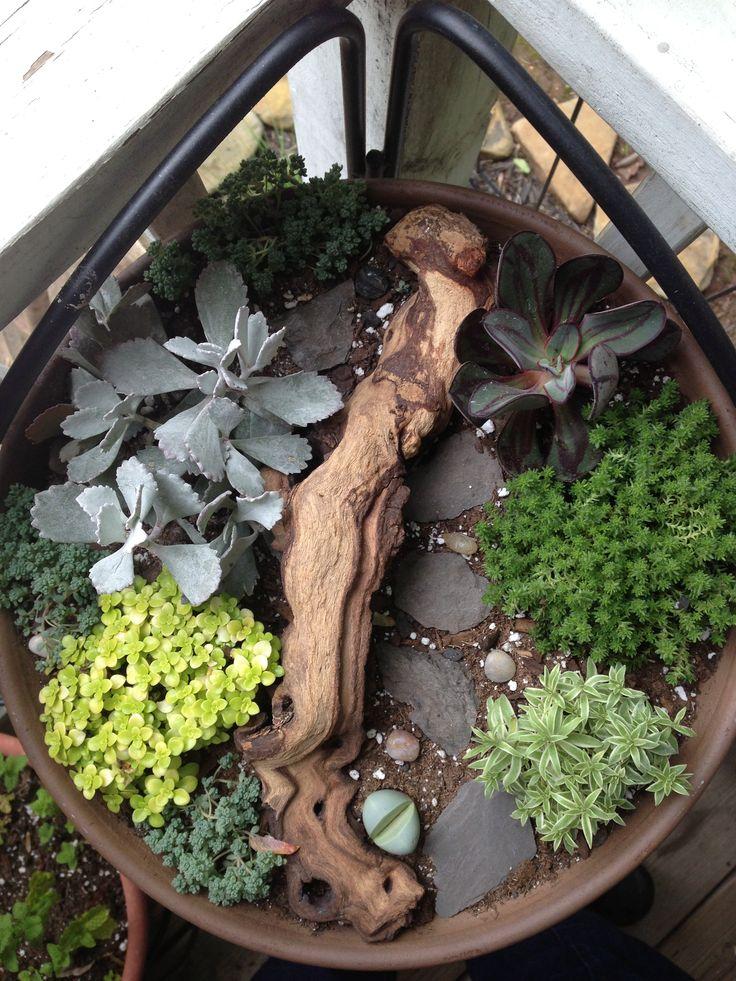 Mini Succulent Garden Miniature Gardens Fairy Houses