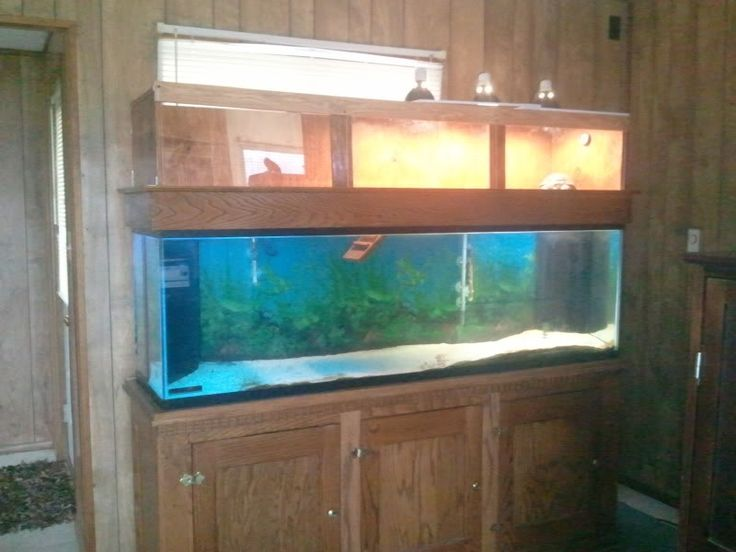 Turtle Tank 120 Gallon 120 Gallon Tank With Tator 2017