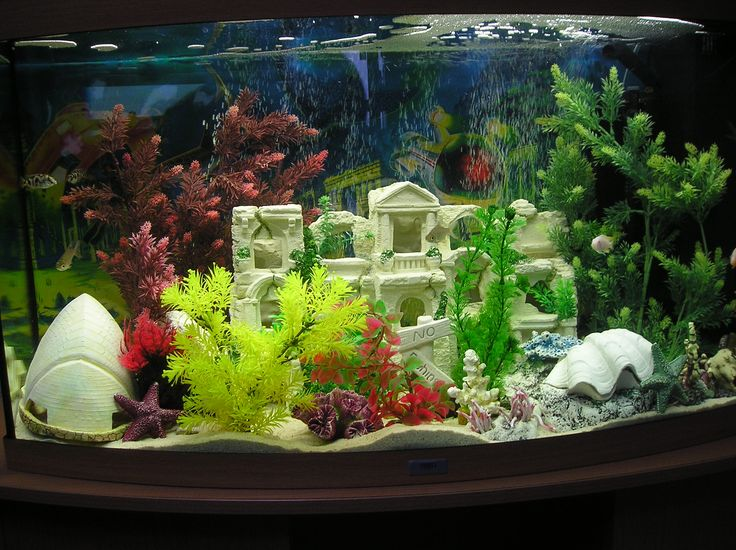 google fish tank