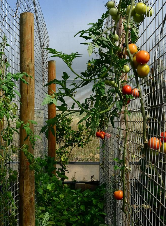Slow Living Essentials: Seven Hills Organic Farm Open Day tomato ideas
