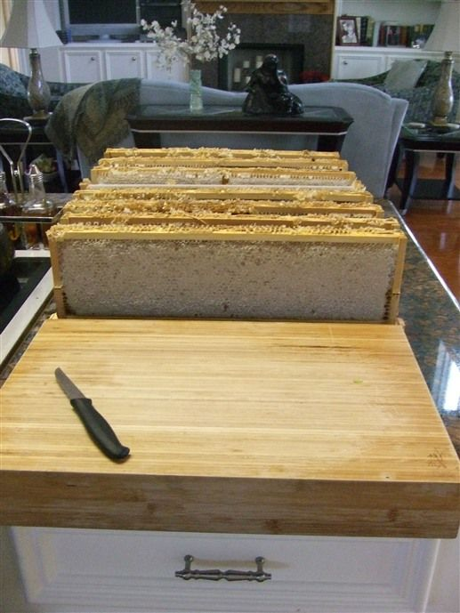 The innkeeper at Honey Farm Bed and Breakfast in Katy, TX is also a beekeeper. The inn also has a number of domesticated animals - geese, ducks, llamas, sheep, etc. - that roam a large penned area and barn, and can be petted and hand-fed if you are so inclined.