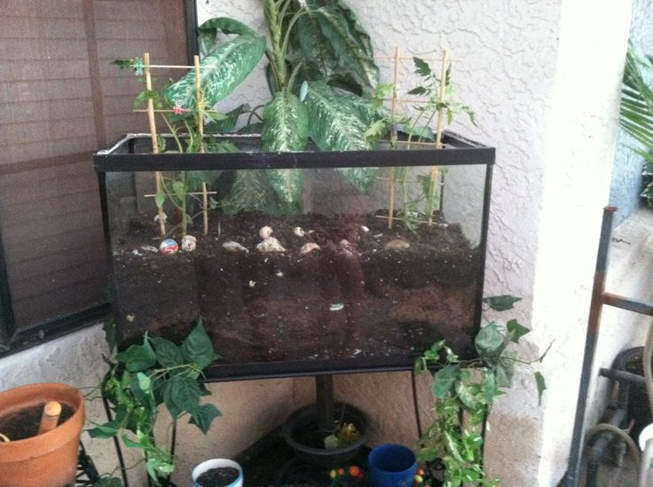 old fish tank new garden home pinterest