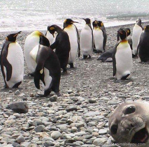 Seal Photobomb.