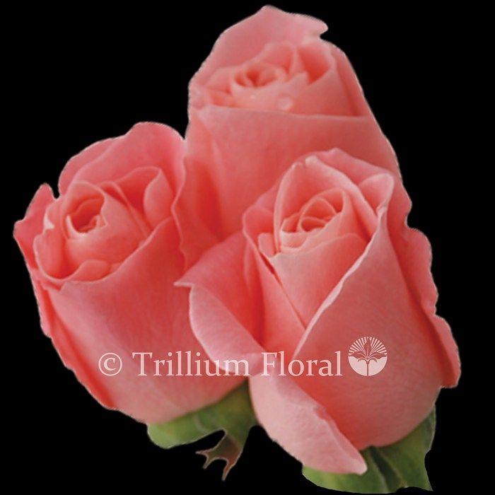 wholesale flowers canada ontario