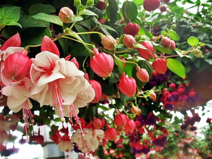 Wedding Flowers Killarney : Beautiful fushia flowers wedding