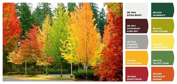Fall Color Scheme Amusing With Fall Wedding Color Schemes Image