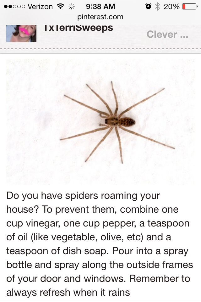Get rid of spiders from your home diy stuff pinterest for How to get rid of spiders in the house uk