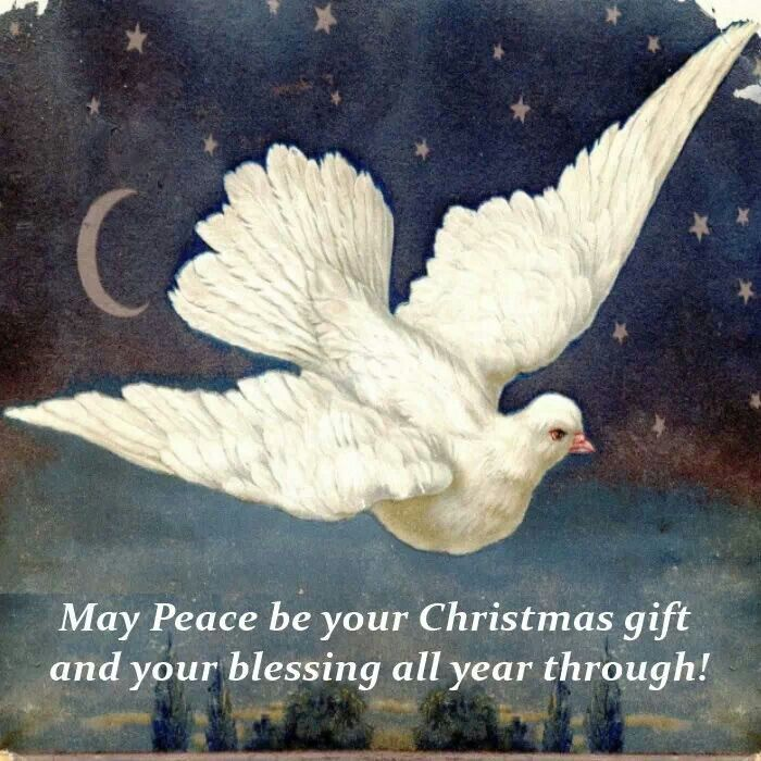 ... peace be your christmas gift | Wing Of a Snow White Dove | Pinter