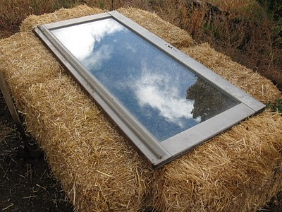 High Desert Home Garden: Strawbale Coldframe and Post-Frost Plant Fotos