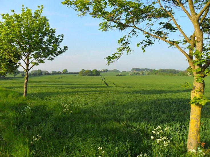 northern German countryside by Uploaded by: dinnmsu on wunderground