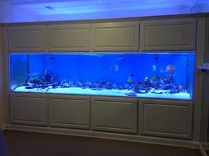 Pin by julie rathbun pletcher on fish tanks pinterest for Fish tanks direct