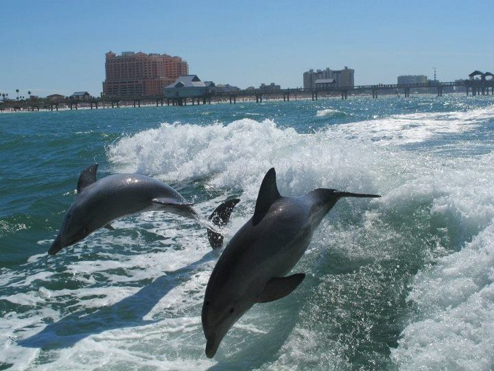 dolphin senior personals Favorite this post may 24 vacation rentals orange beach and gulf shores (orange beach) pic map hide this posting restore restore this posting favorite.