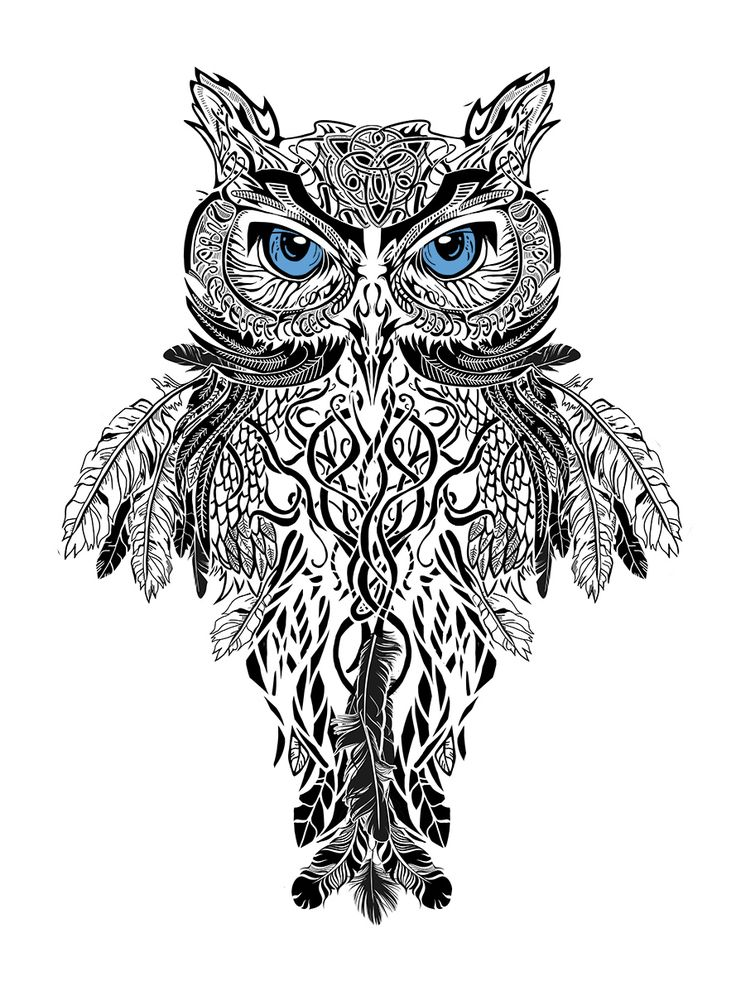 All seeing eye owl drawing