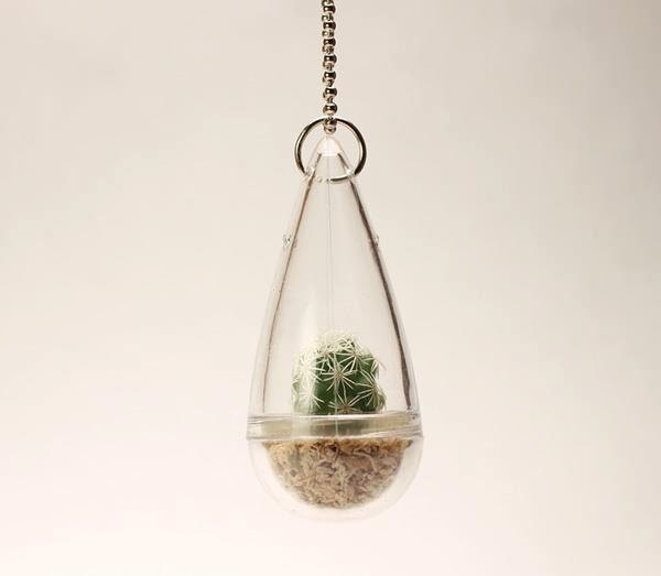 real living tiny green thimble cactus plant necklace with