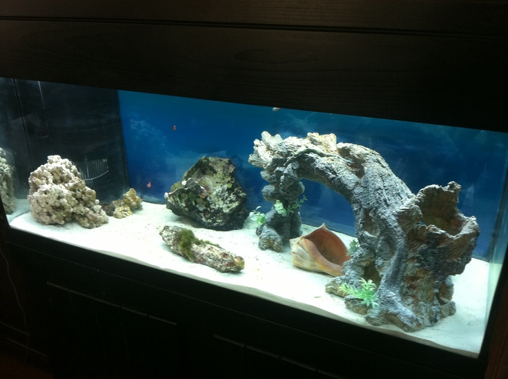 Pin By Brittany Almond On Salt Water Tank Pinterest
