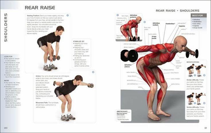 The Fitness era: Rear delt exercise | Workout Stuff ...