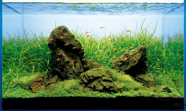 Rock placement on aquascapes Decore Ideas Pinterest