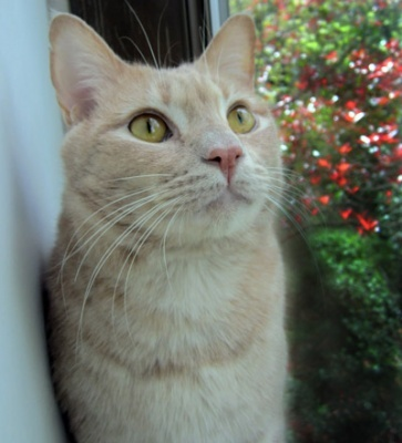 Met your soul mate aiden is available for adoption learn more at http