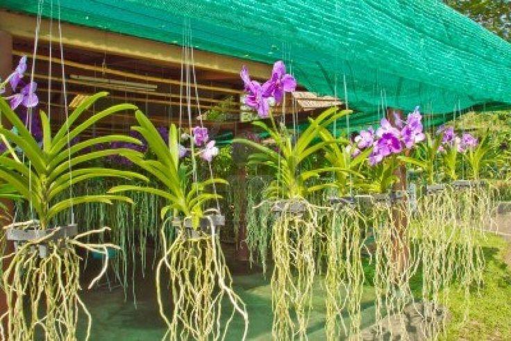 Jardines de orqu deas amphawa mercado for Jardines de orquideas