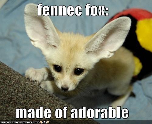 fennec fox made of adorable | adorable | Pinterest Megan Fox