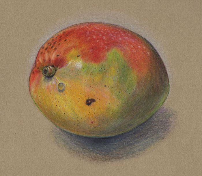 mango drawing - Google Search | Tattoos | Pinterest