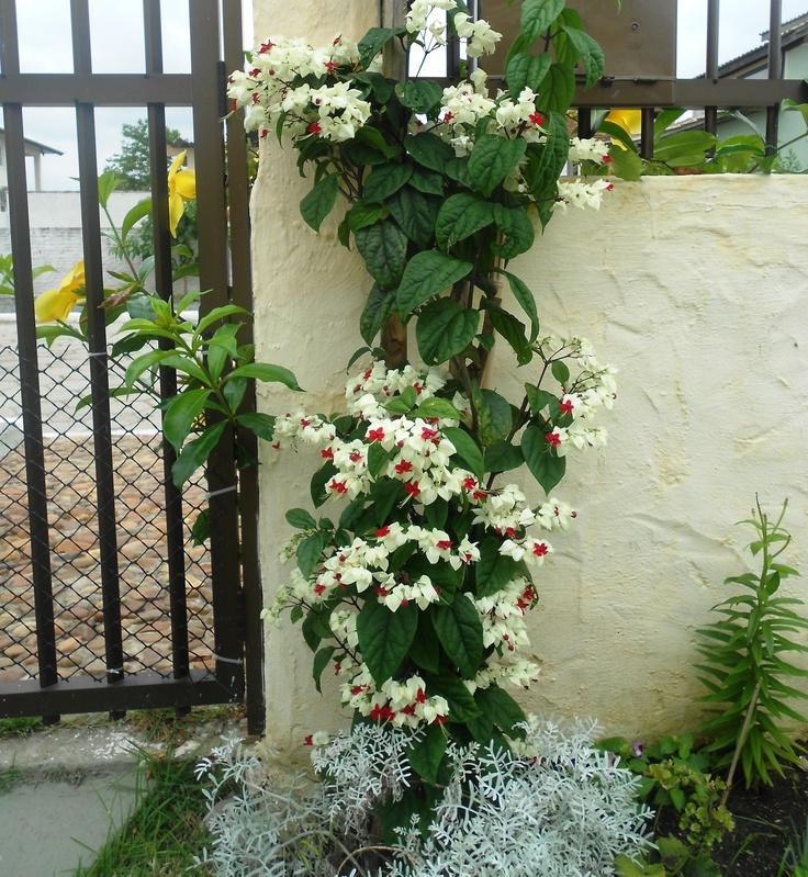 flores do jardim kboing : flores do meu jardim kboing ? Doitri.com