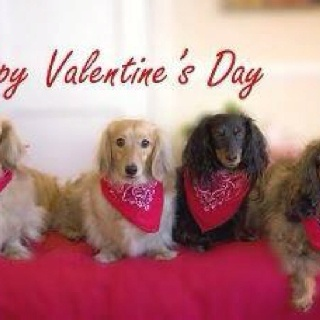 happy valentines to you all